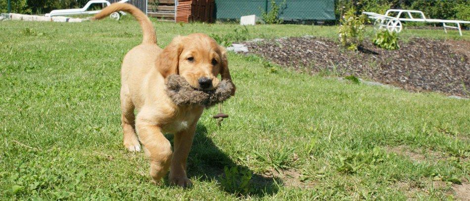 Sicherheitsausrüstung Hund