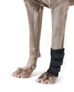 Hundegelenkschoner von Back on Track