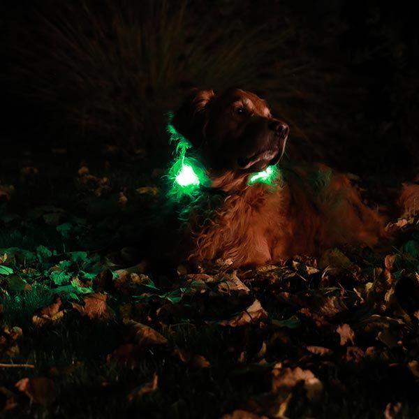 Licht am Hund